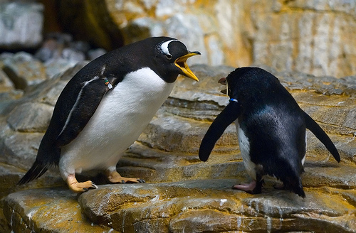 The image is of two penguins arguing, the bigger one with its beak wide open shouting down the smaller one