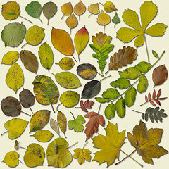 This image is called Autumn Leaves. It shows a selection of autumn leaves and was found at Eva Ekeblad's Flickr photostream. It is used under the terms of the Creative Commons Attribution-NonCommercial-ShareAlike 2.0 Generic license.